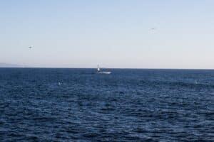 Dunedin, FL - Injuries after Jet Ski Collides with Boat near Honeymoon Island